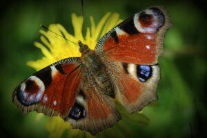 The organism-environment